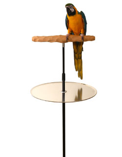 parrot training perch stands