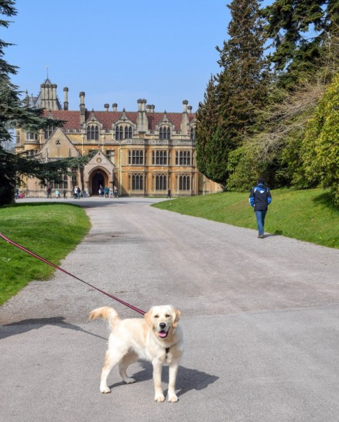 Dog outside Tyntesfield house National Trust