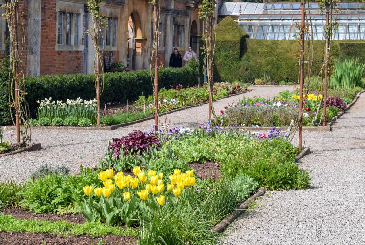 Cut gardens outside the Orangery at Tyntesfield