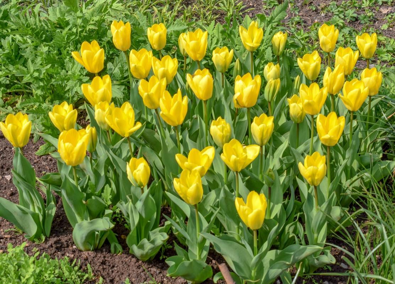 Spring flowers at Tyntesfield
