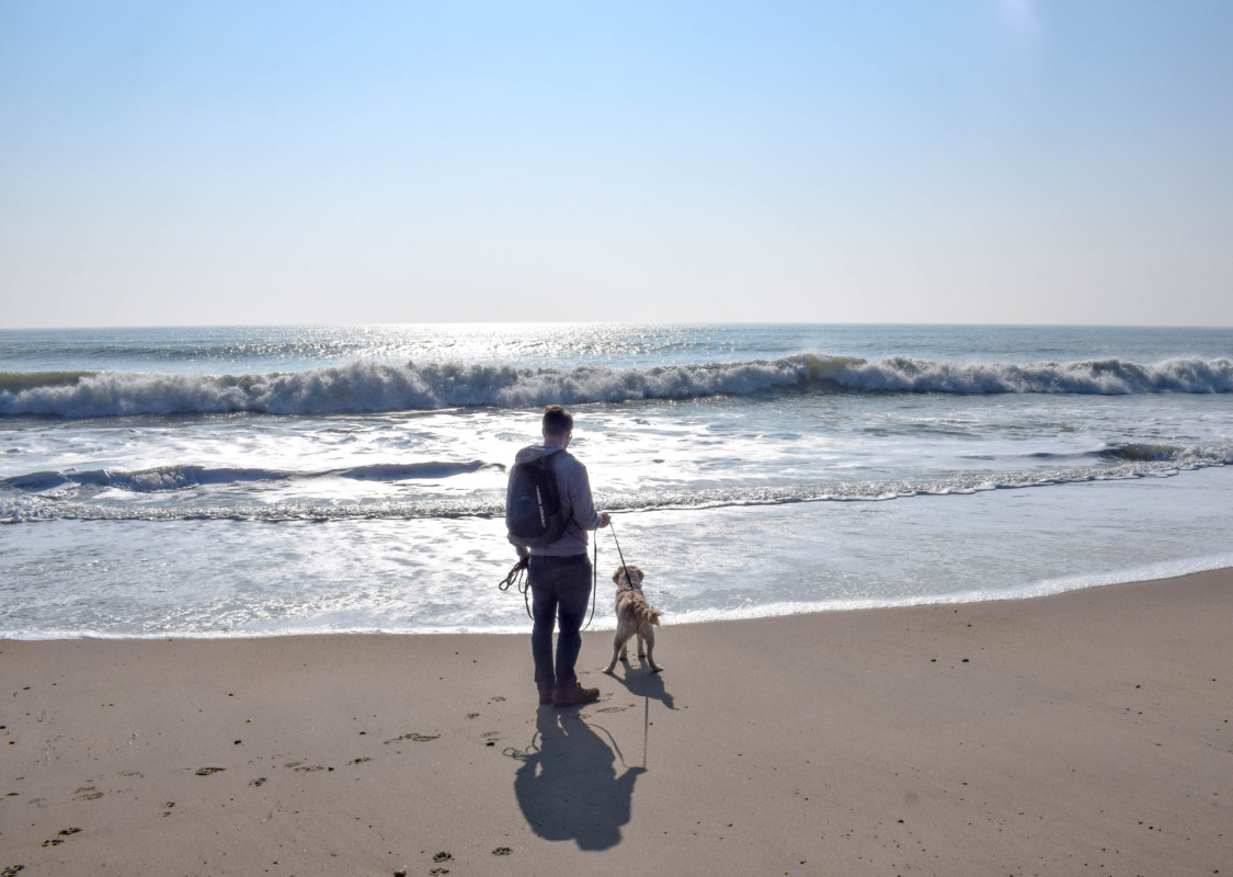 A Dog Friendly Guide to The New Forest
