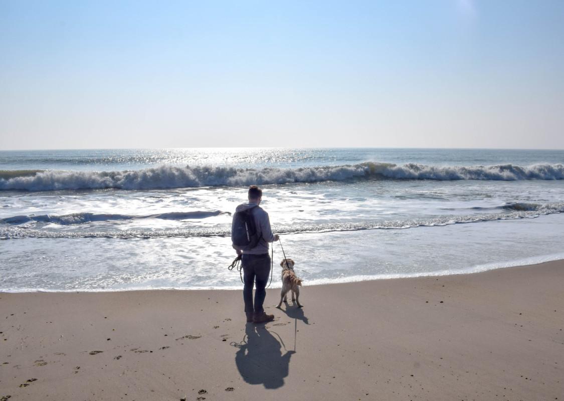 Dog friendly New Forest beach