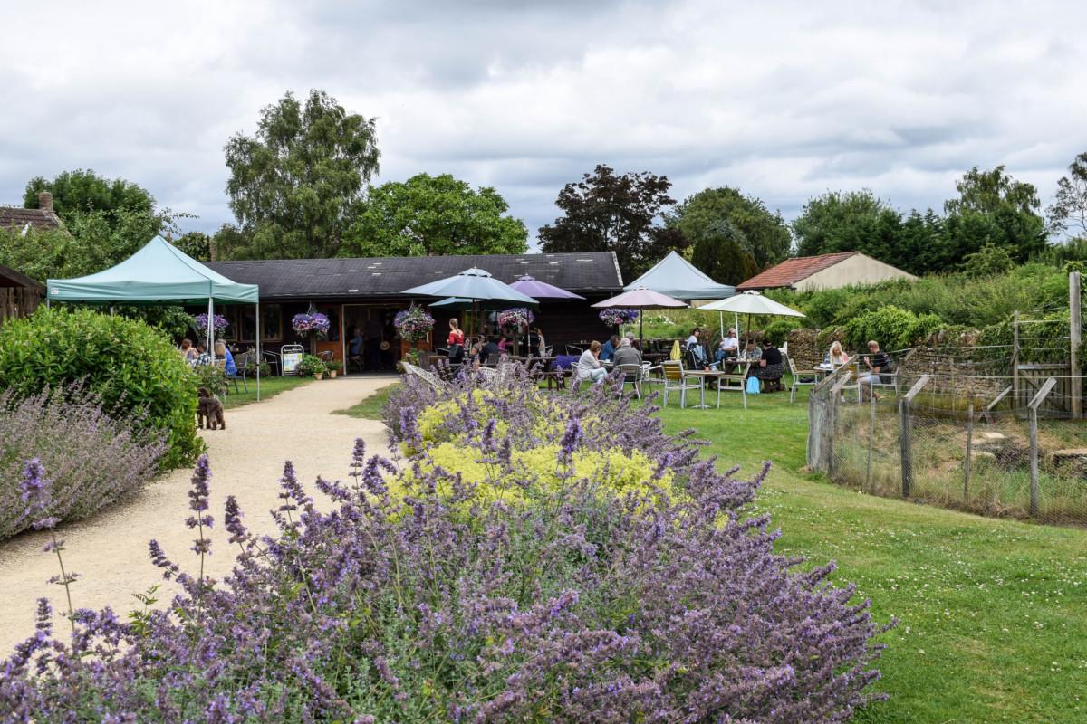 Somerset Lavender Farm cafe