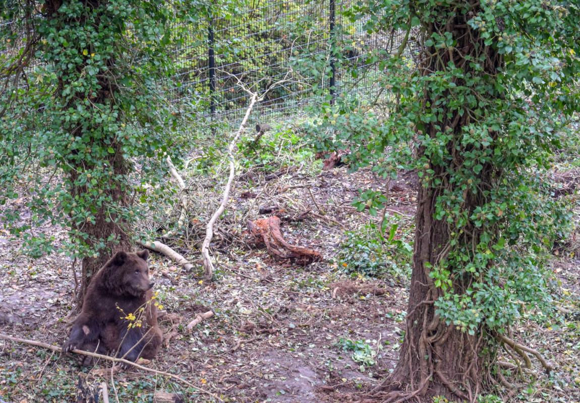 Wild Place Bristol Bear Wood