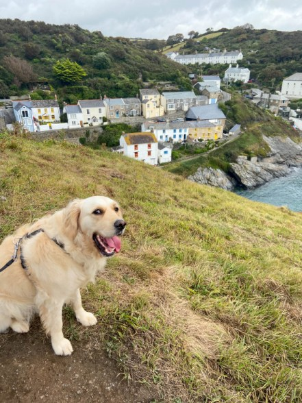 Portloe dog friendly cornwall