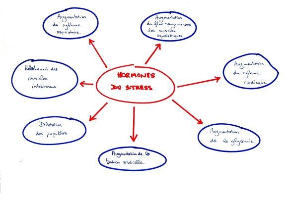 impact hormones stress