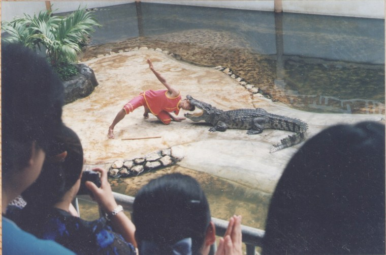 Putting head in Crocodile's mouth