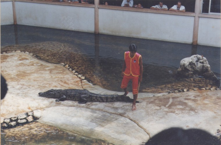 Crocodile Farm Show