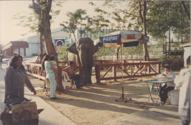 Elephant at Siam Park