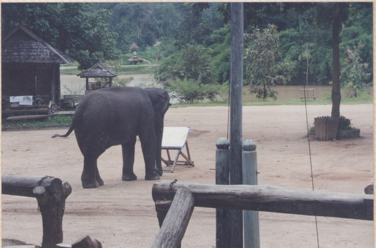 Elephant making a Painting