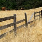 Golden grass and a wooden fence in Sonoma, CA