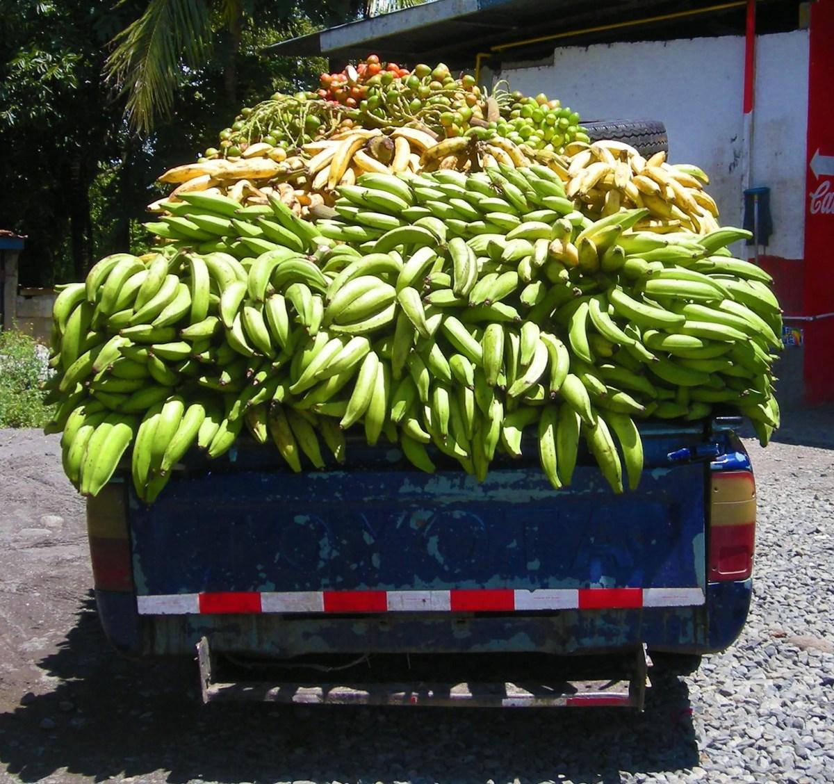 unripe banana delivery