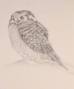 NEW CLASS! DRAWING STUDIO SKILLS: BEGINNING DRAWING FOR EVERYONE WITH A PENCIL!