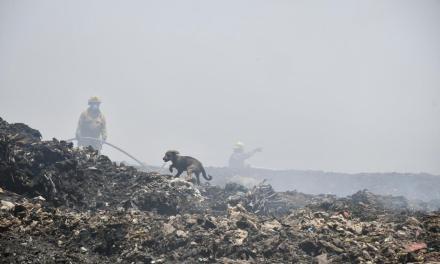 Rescatan a 5 cachorros de incendio en vertedero Los Laureles