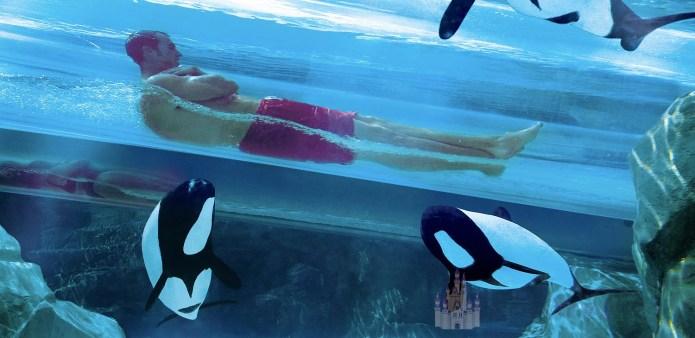 Parque Aquatica sea world