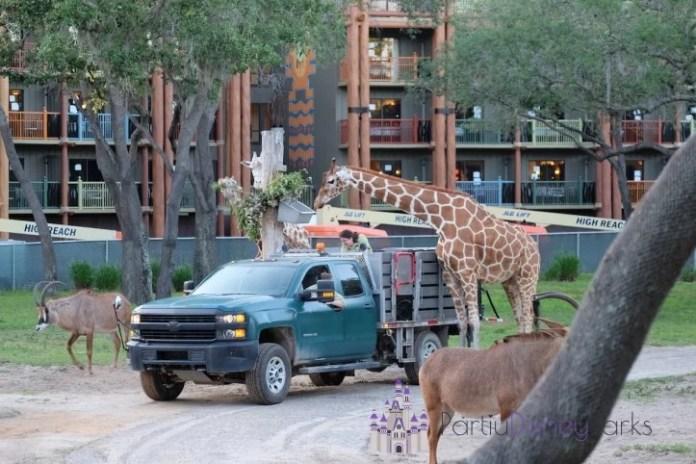 Wanyama-Safari-animal-kingdom-lodge-segredo-disney