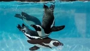 Penguin Point Busch Gardens