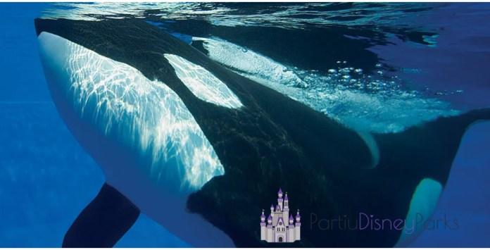 Incontro dell'Orca