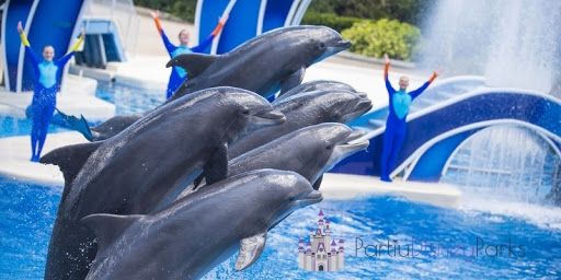 dolphin-days-sea-world