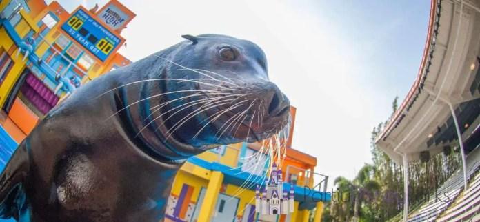 sea-lion-high-new-class