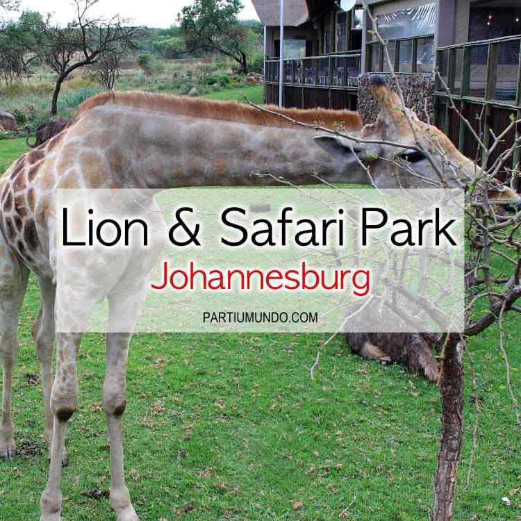 Lion and Safari Park 1