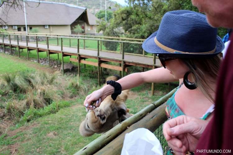 Lion and Safari Park 16