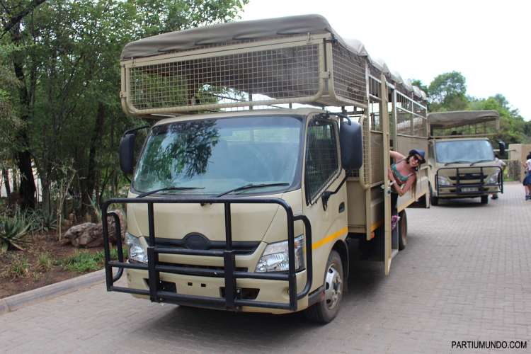 Lion and Safari Park 2