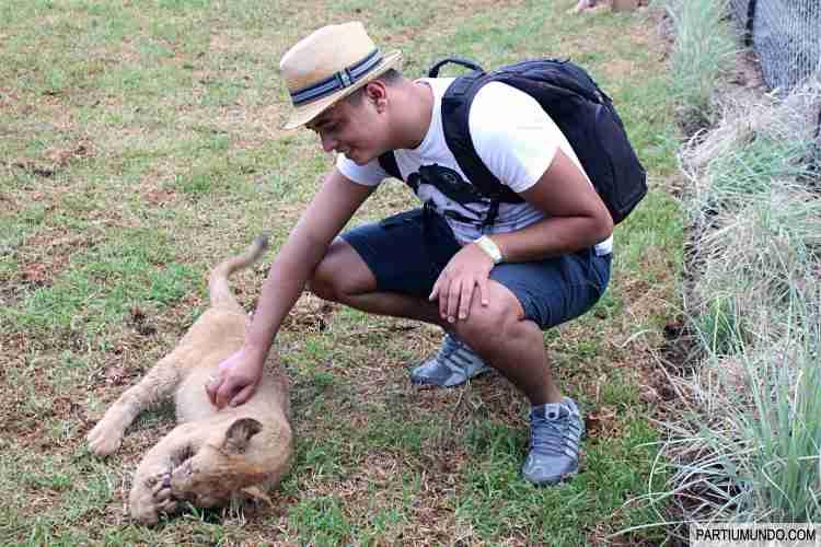 Lion and Safari Park 26