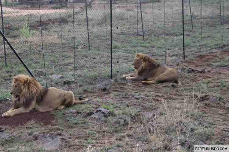 Lion and Safari Park 5