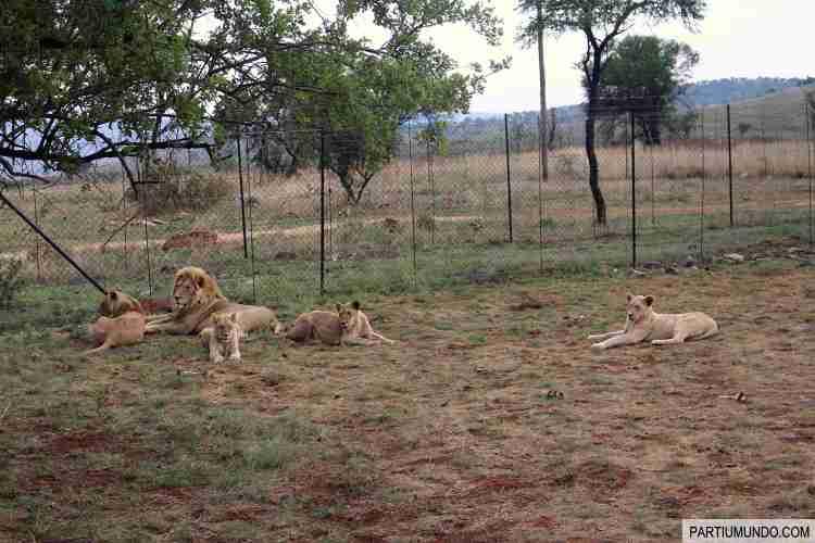 Lion and Safari Park 9