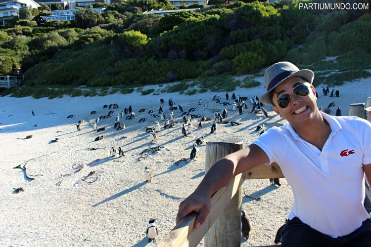 rsz_visiting_the_penguins_at_boulders_beach_20