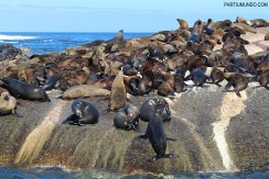 Visiting the seals at Duiker Island, Cape Town 1