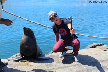 Visiting the seals at Duiker Island, Cape Town 28