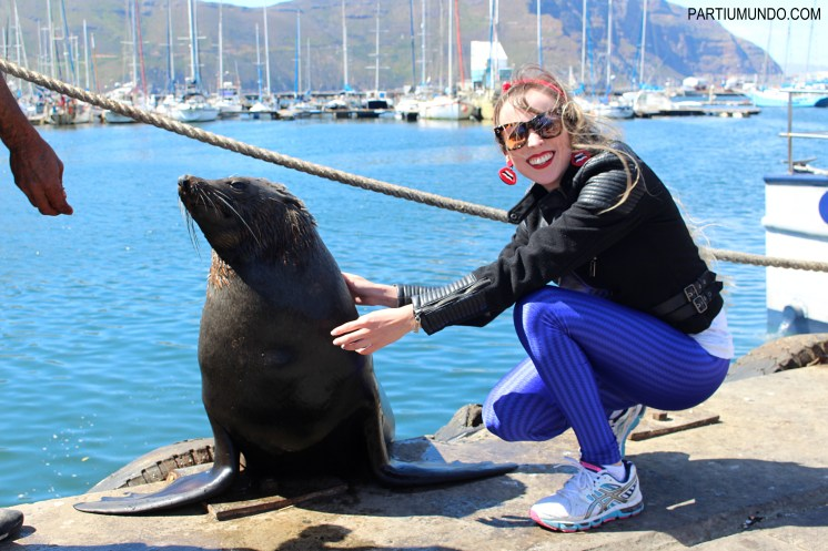 Visiting the seals at Duiker Island, Cape Town 29