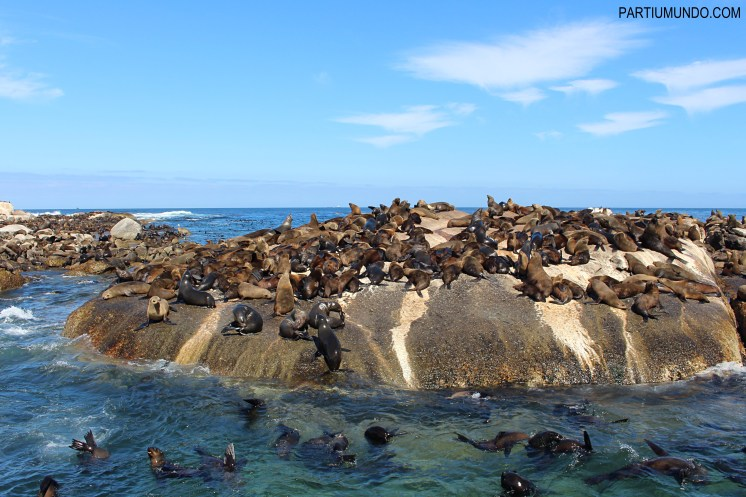 Visiting the seals at Duiker Island, Cape Town 9
