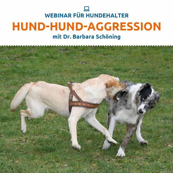 Webinar Hund-Hund-Aggression
