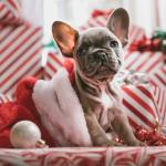 Get ready for: the festive marketing season