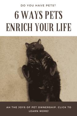 Ways pets enrich your life