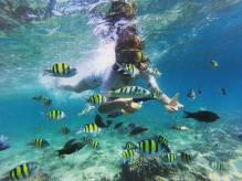 wisata snorkeling pulau pagang-sumbar