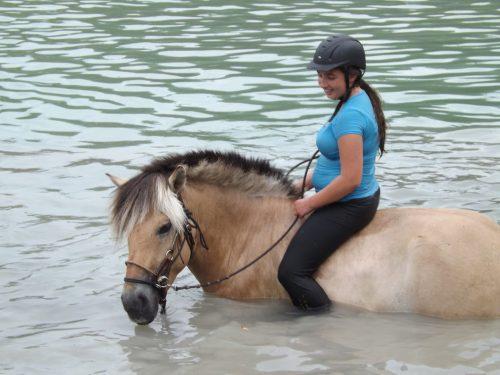nava-swim-horse