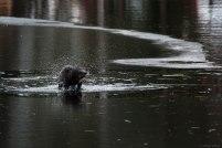 River Otter (4)