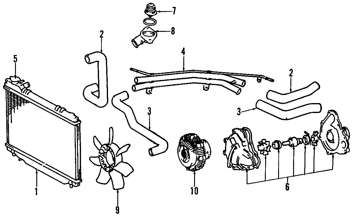 Toyota Previa Hose, radiator, no.4. Lower hose. Radiator