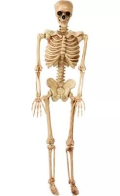 bones skeleton diagram with labels 2000 ford explorer spark plug life-size poseable 2ft x 5ft - party city