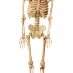 Blank Skeletal Diagram 2005 Dodge Ram Infinity Wiring Life-size Poseable Skeleton 2ft X 5ft | Party City Canada