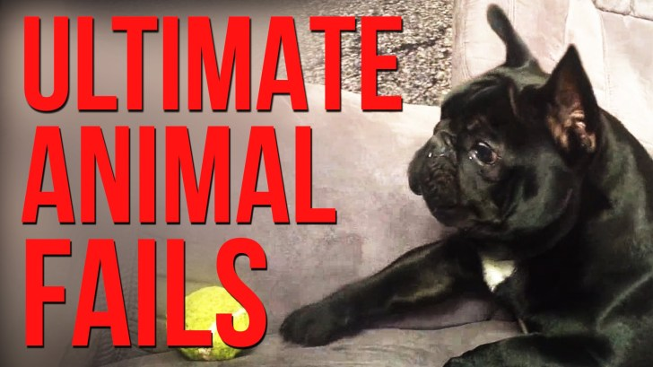 Funniest-Animal-Fails-Compilation-FailArmy