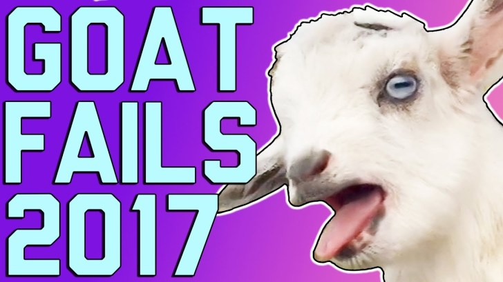 Funny-Goats-Screaming-Is-Optional-March-2017-FailArmy
