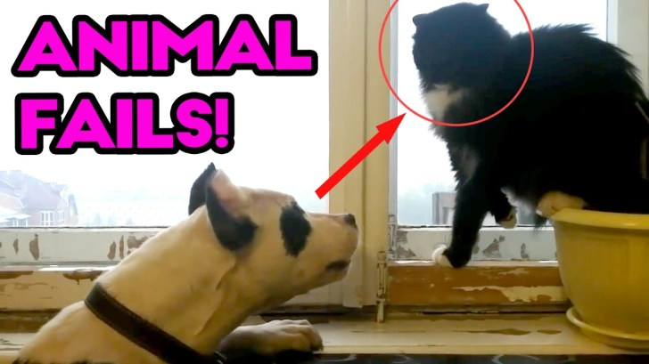The-Best-ANIMAL-FAILS-Funny-Fail-Compilation-April-2017-Funny-and-Silly-Cats-Dogs-and-Pets