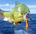 Key West Fishing Reports
