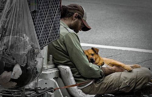 homeless-dog-9
