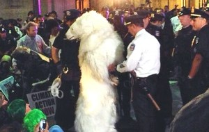 climate change statistics, polar bear arrested